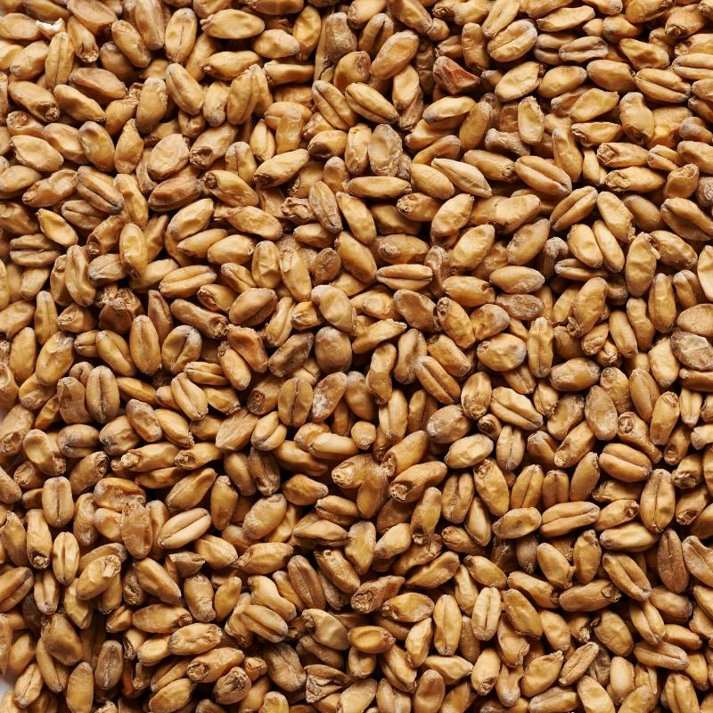 Joe White Wheat Malt
